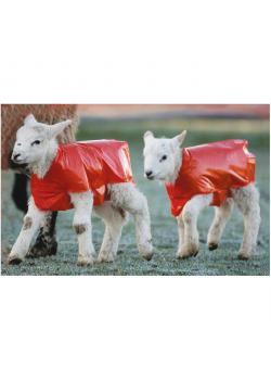 Lamb blanket - red - VE 25 pieces - Price per pack