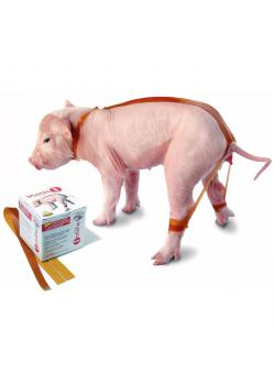 Piglet Spreading Bands SPLAYLEGSTOP - VE 20 pieces - Price per PU